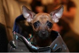 Puppy Love Lost – Help Me Dog Expert