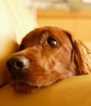 Dog Depression: Causes and Cures