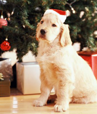 Twelve Days of Dog Holiday Gifting
