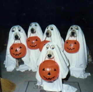 Pet Halloween Safety for Dogs