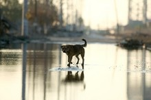 How Being Prepared in a Natural Disaster Could Save Your Dog