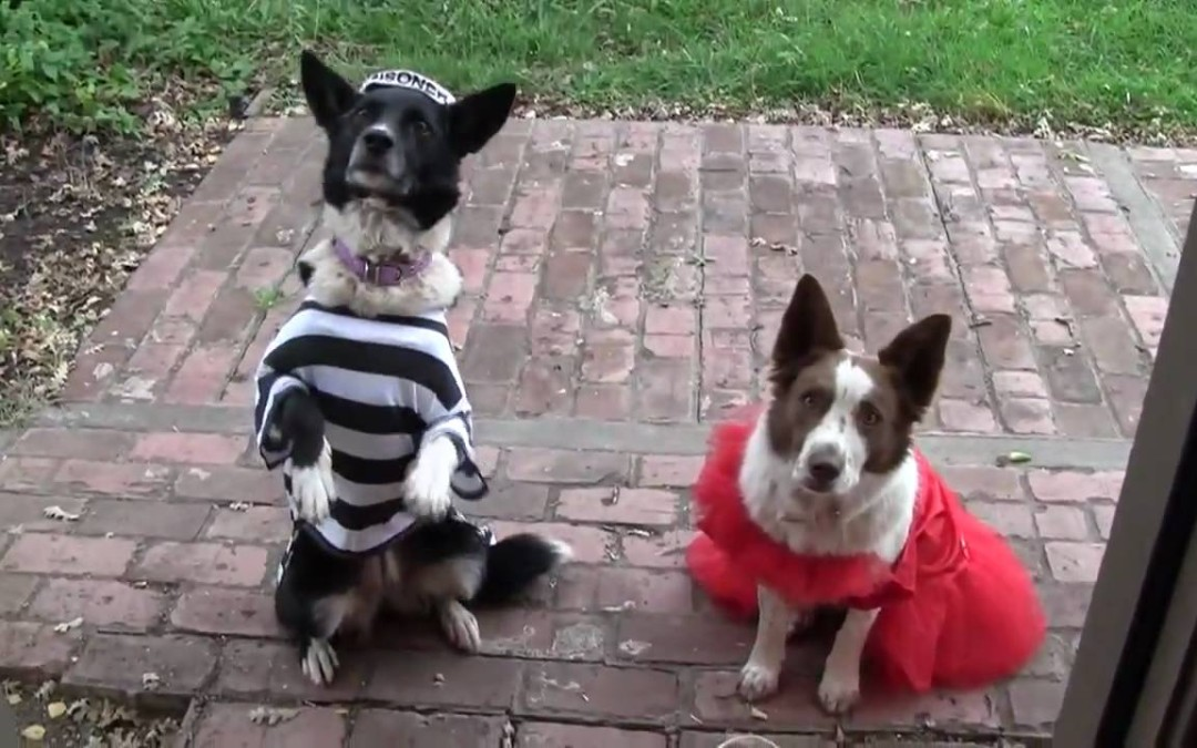 Busy Bee Dogs at Halloween