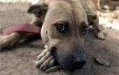 The Internet: a puppy mill's best friend