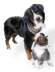 Must Luv Dogs! Help Me Dog Expert