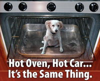 DOGS LEFT IN CARS AND HEATSTROKE