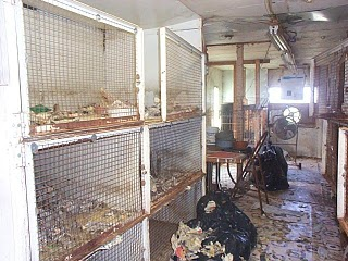 Missouri Approves Tighter Rules for Puppy Mills