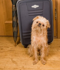 Prepare Your Dog for Holiday Boarding