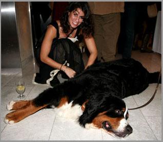Reiki for Your Dog